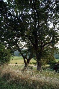 chateau-chatard